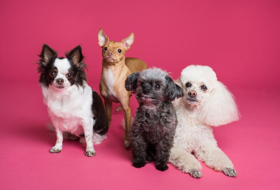 Start verkiezing Dierenarts van het Jaar 2020 - Huisdierbezitters kunnen weer op om hun favoriete dierenarts stemmen