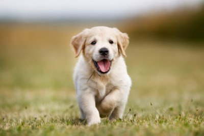 Populariteit van huisdieren blijft aanhouden - Met voorspelde negatieve gevolgen voor de huisdieren