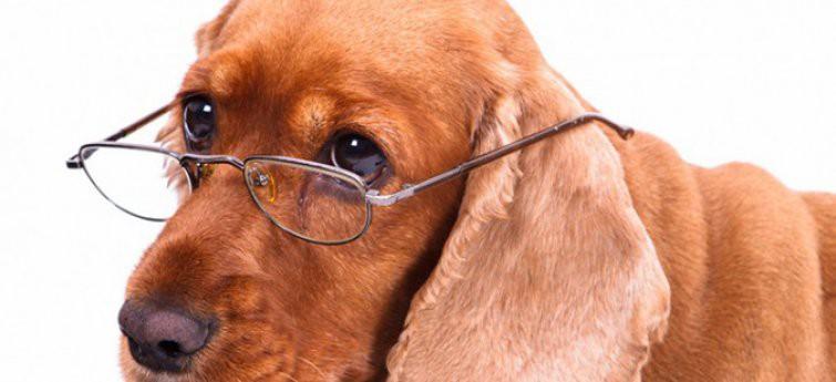 Passende zorg bij ouderdom van je hond - Waar moet je extra op letten?