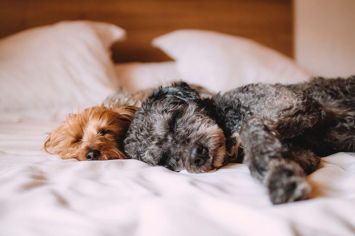 Dierenartskiezen honden