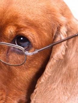 Passende zorg bij ouderdom van je hond